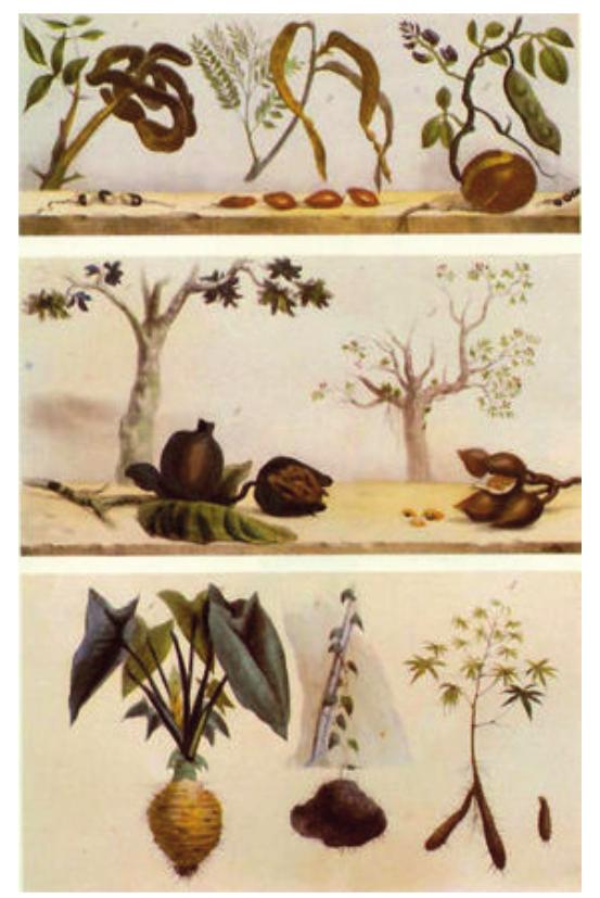 Na figura as árvores e arbustos estão didaticamente atrás da representação dos frutos e sementes