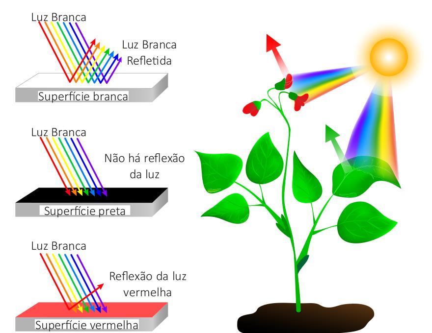 Reflexão e absorção de diferentes comprimentos de onda